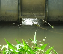 quance-dam-fish-passage5