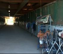 fletchers stables