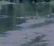 nanticoke creek low flow in summer